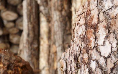 Minden, amit tudni kell a faanyagok tulajdonságairól