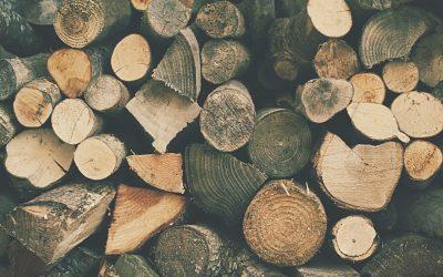 Tájékozódjon a fafajtákról, mielőtt meglátogatja a fatelepet